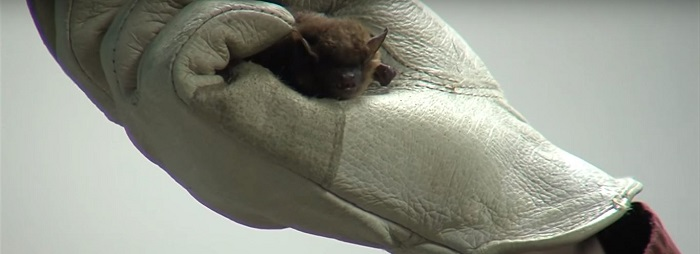 What Kind of Noises and Sounds do Bats Make When They Live